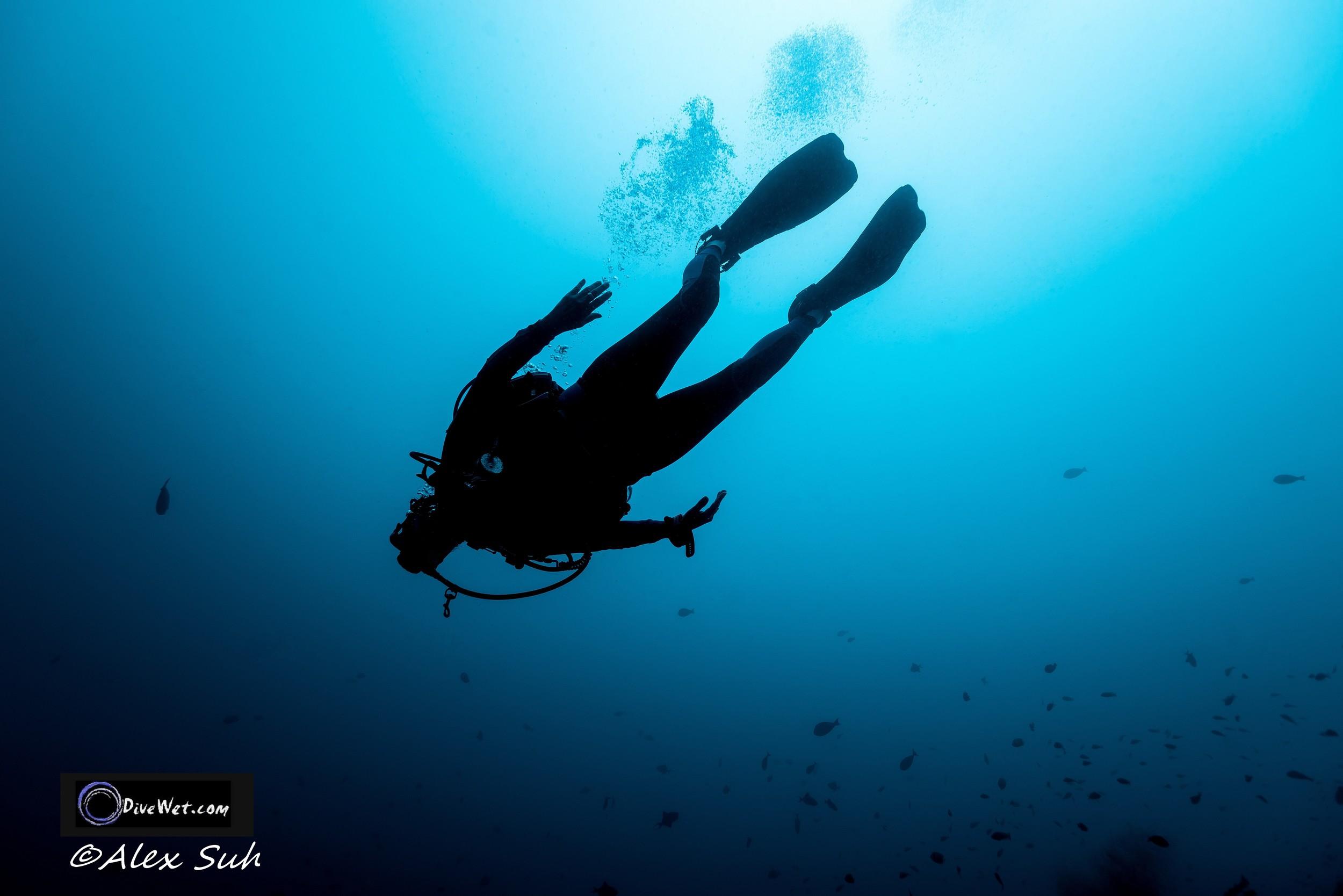 Diver in Peace