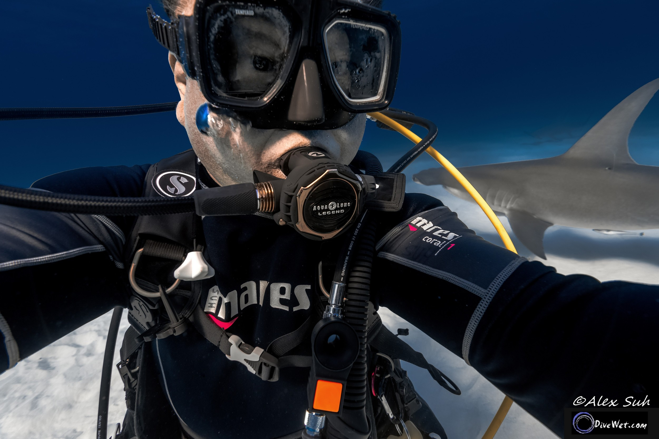 Great Hammerhead Shark (Sphyrna mokorran) - Selfie with a Hammer