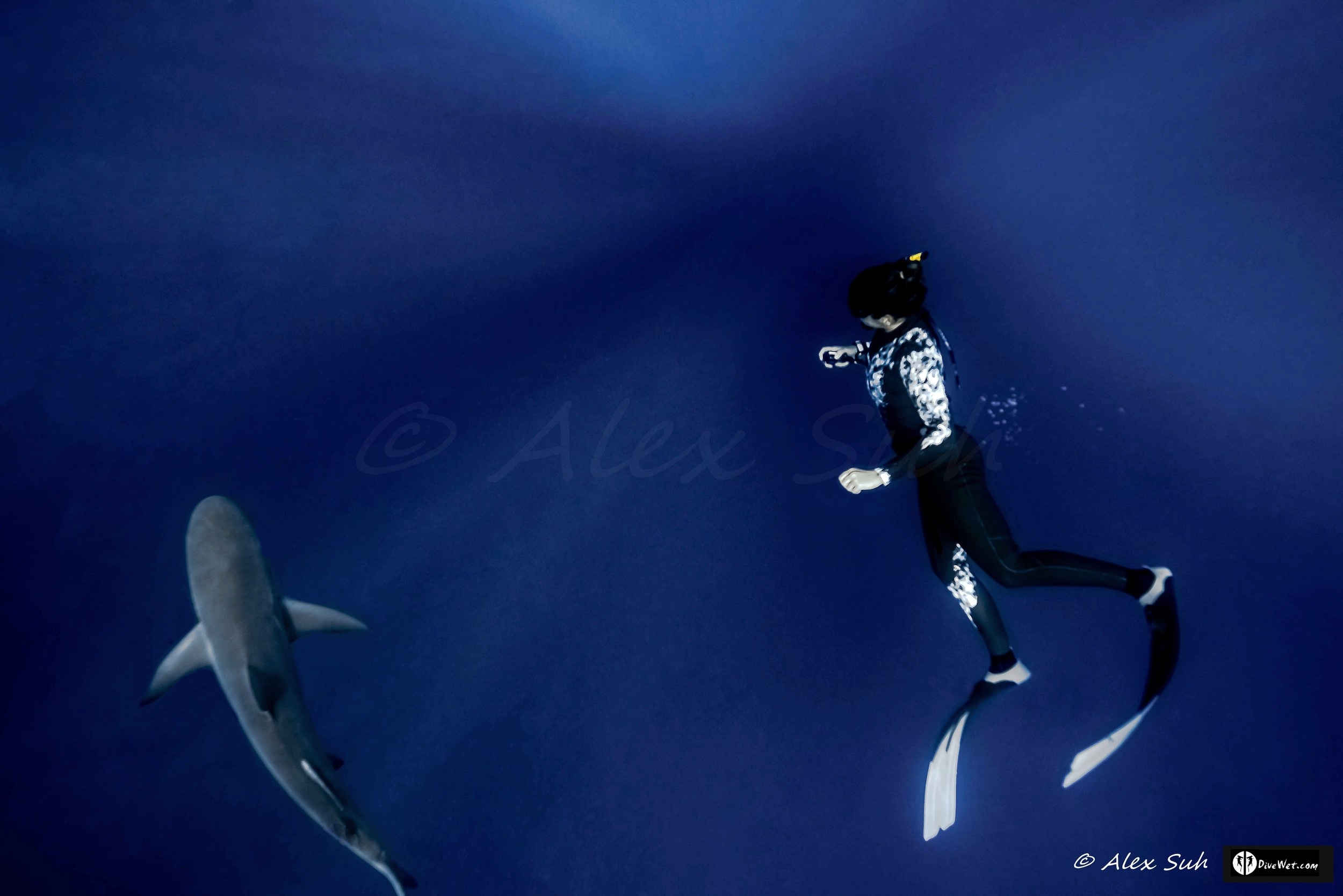 Greek Freediver Katerina Dancing with Caribbean Reef Shark (Carcharhinus perezii)