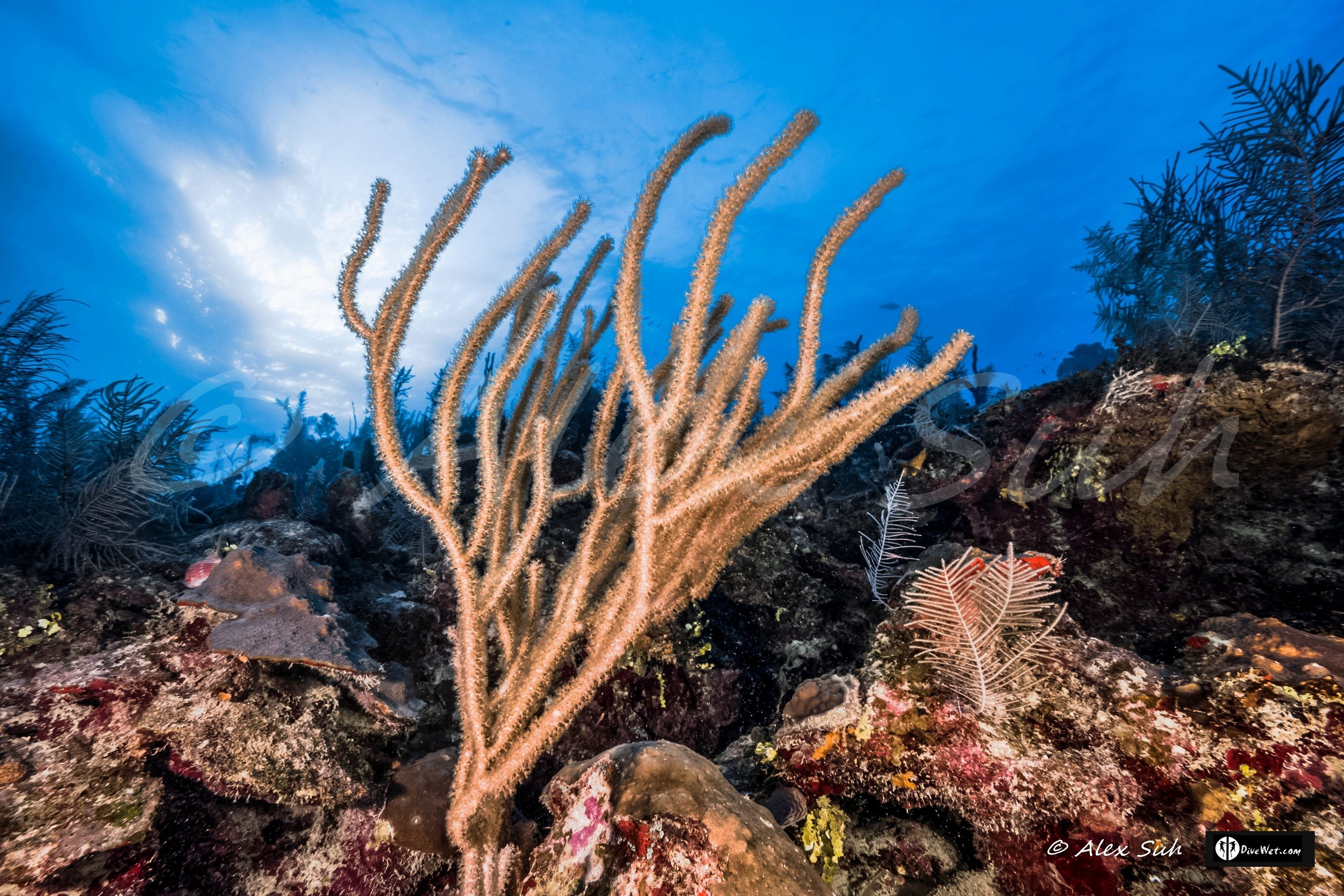Soft Coral Branch Against Sun Rays on Reef