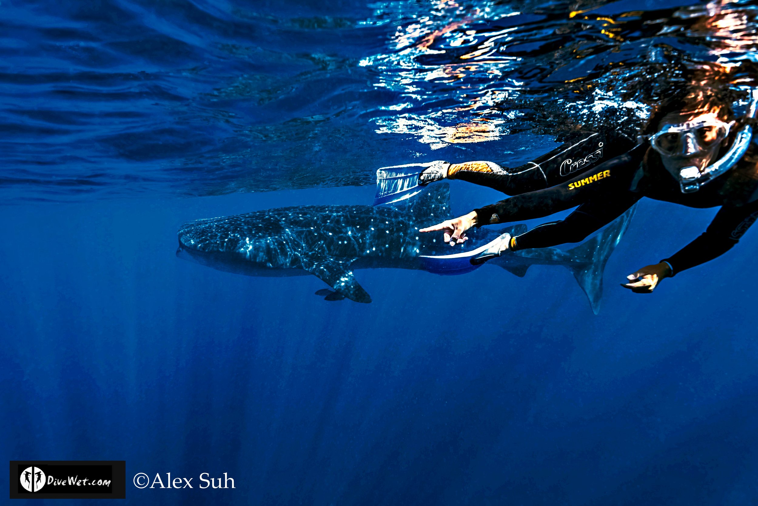 MARKED Mel pointing to Whale Shark 2016.jpg