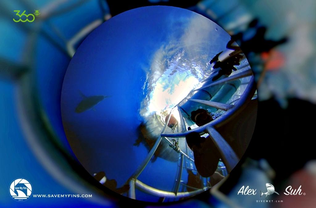 MARKED 360 Cage Image GWS 72 dpi.jpg