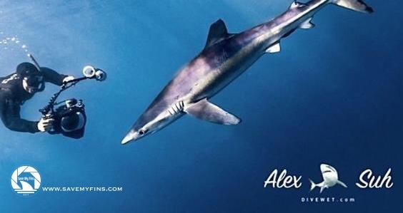 MARKED Blue Shark Nick 72d.jpg
