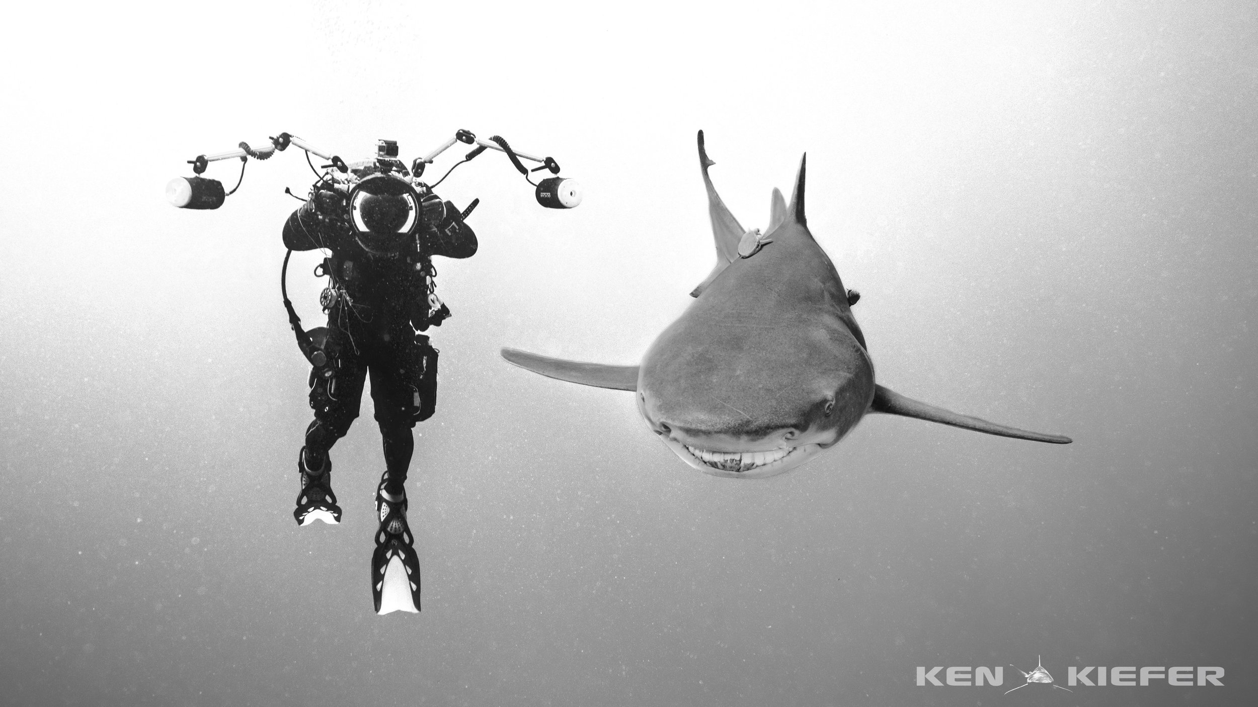 Alex photographing Lemon Shark