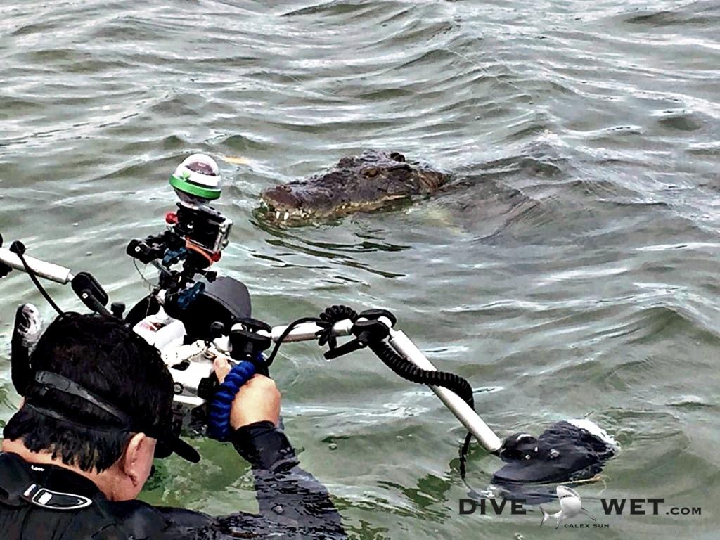 Alex photographing American Saltwater Crocodiles