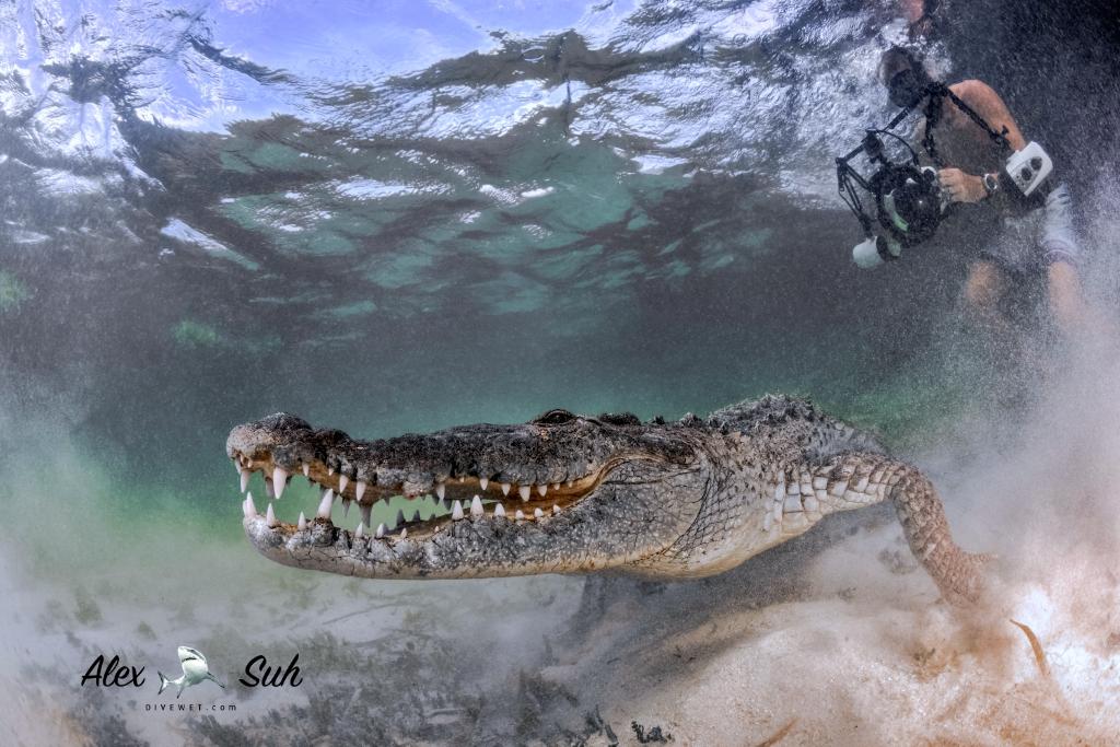 MARKED Croc Angel and Ken 72.jpg