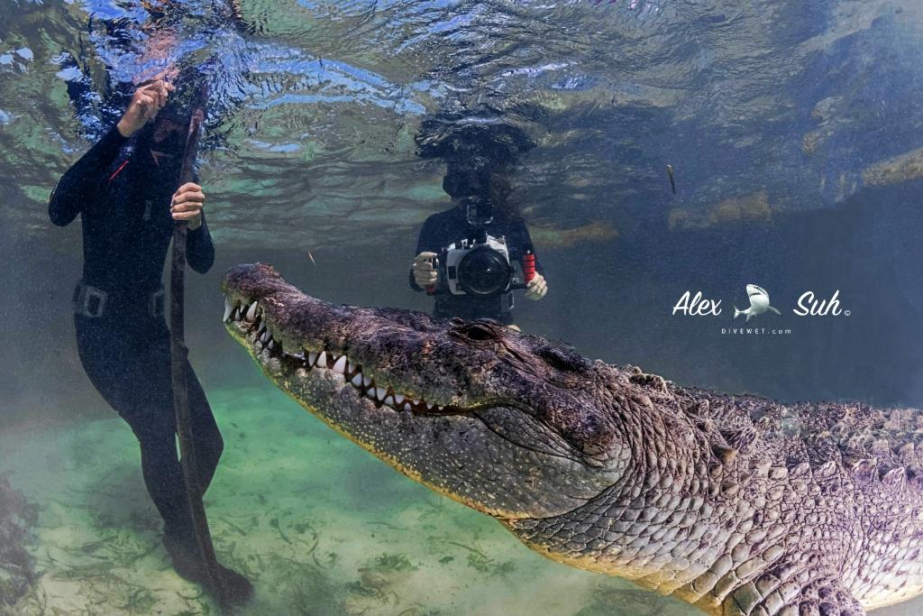 MARKED Croc Kimber Mathias 72dpi.jpg