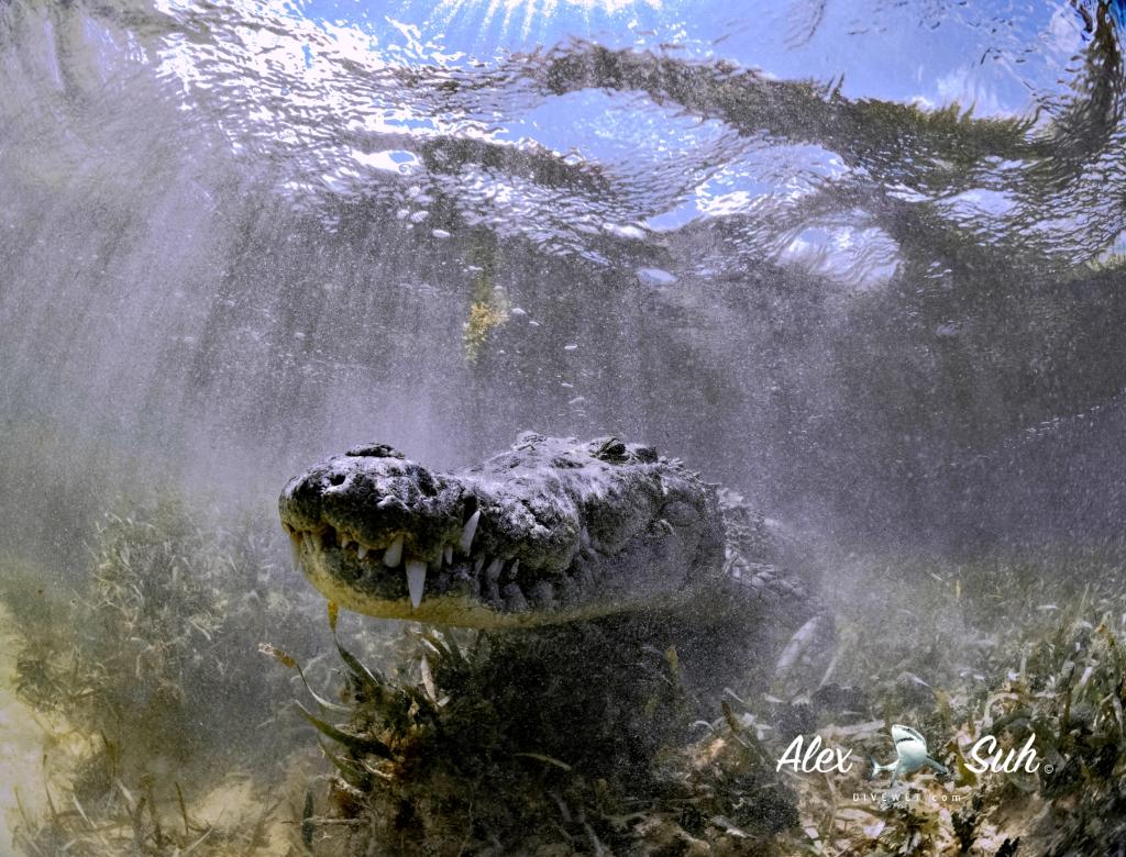 MARKED Croc Ledge Sun 72.jpg