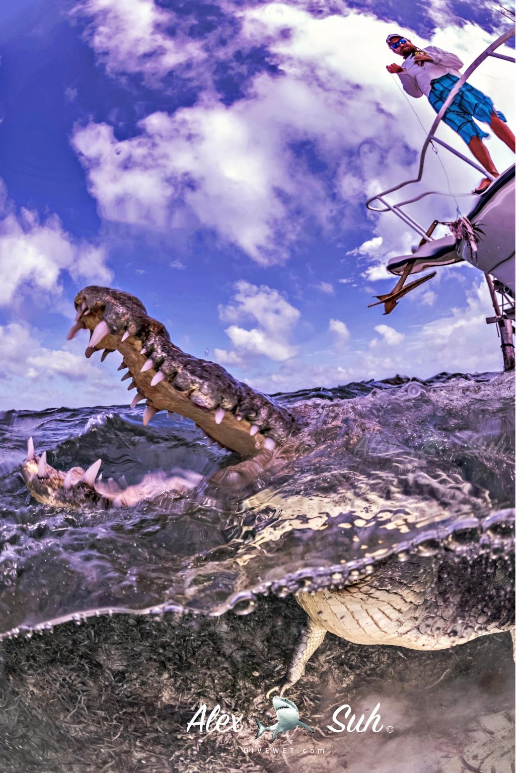 MARKED Croc OU Vert Mouth Best Cropped 72dpi.jpg
