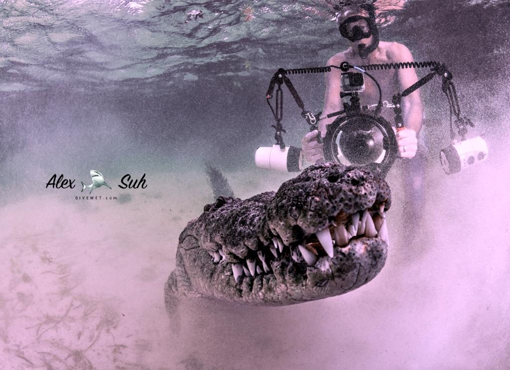 MARKED Ken Croc Sandy 72.jpg