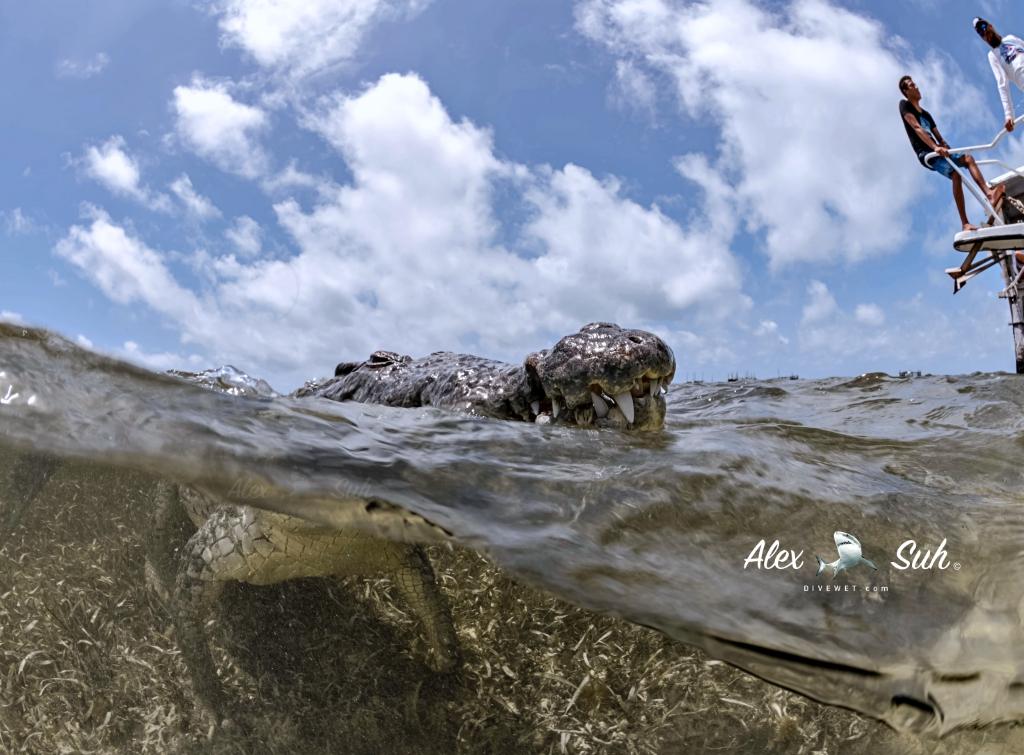 MARKED Croc OU Learing 72dpi.jpg