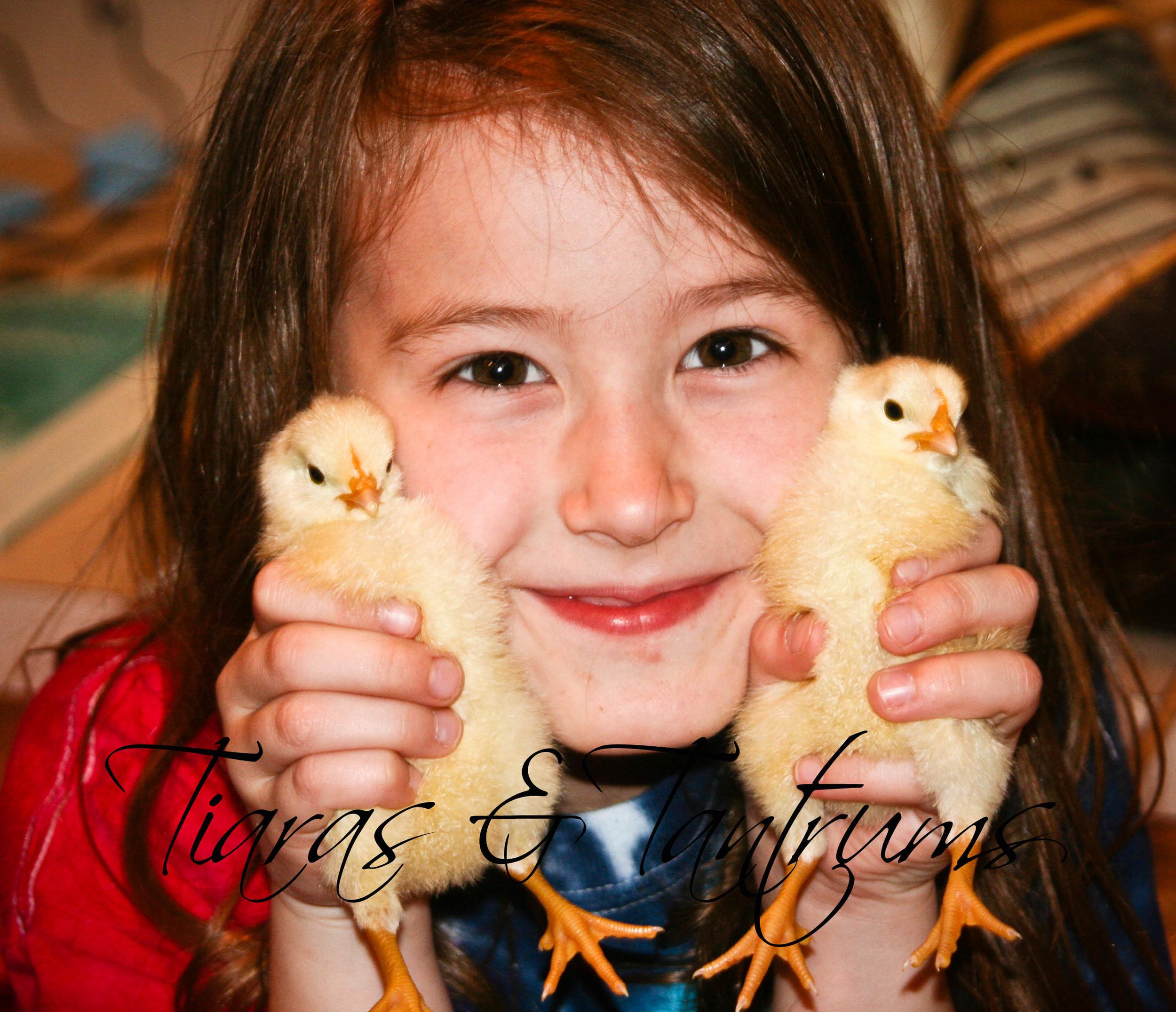 chicks (9 of 1).jpg