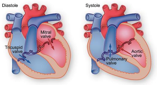 fig10_heartbeat.jpg