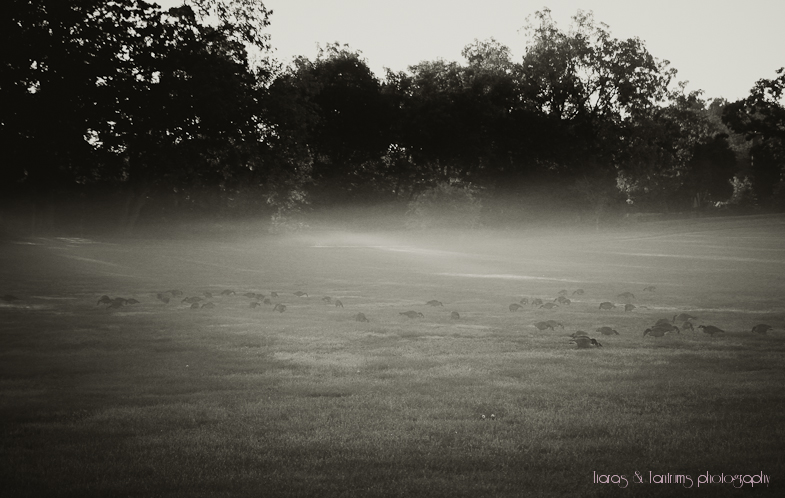 morningmist (5 of 1).JPG