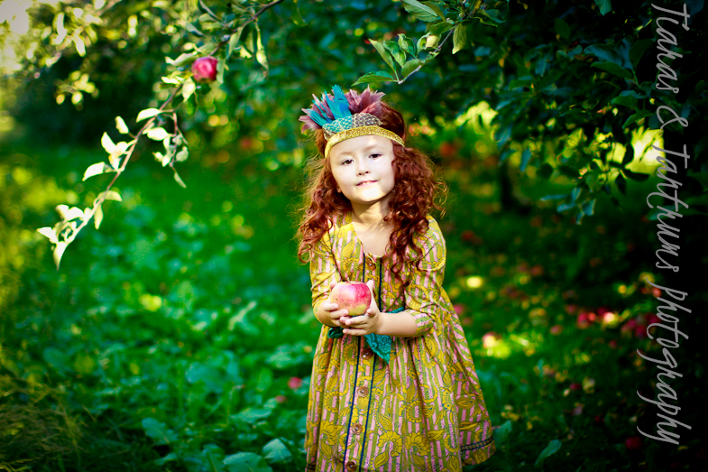 apple orchard photography