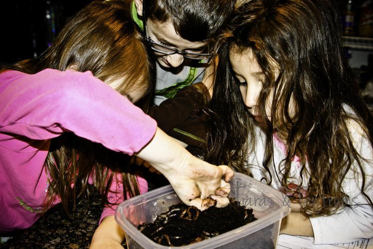 Earthworms Aren't Senseless #Homeschool