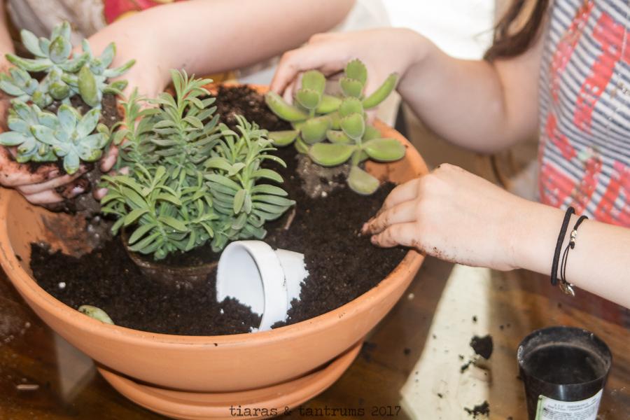 DIY Succulent Container Garden / Resurrection Garden