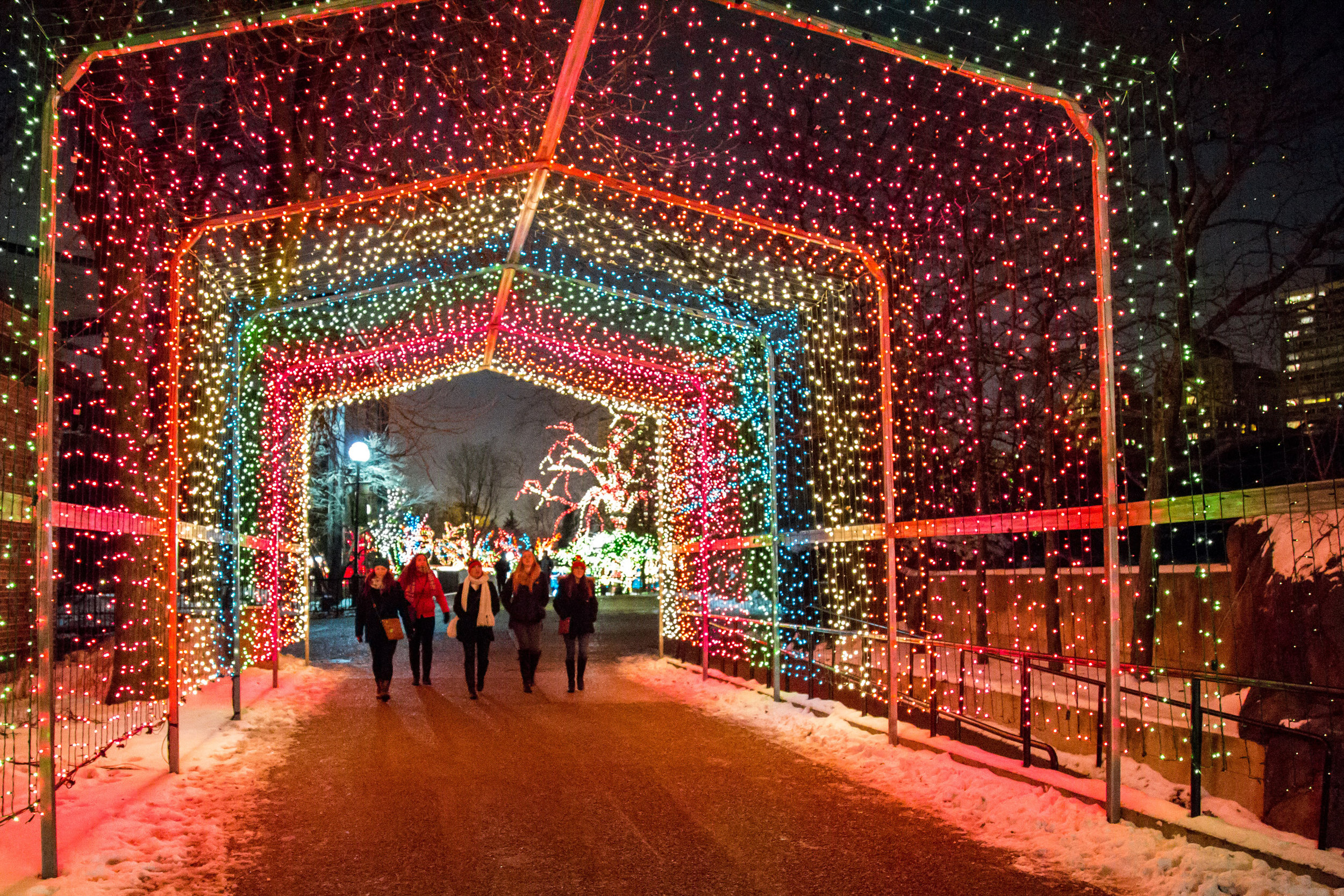 Chicago Guide to the Holidays ZooLights at Lincoln Park Zoo