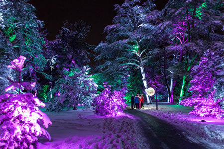 Chicago Guide to the Holidays Illumination: Tree Lights at Morton Arboretum