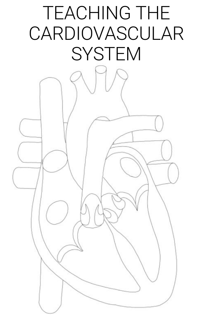 The Human Heart Homeschool Heart Lesson Plan | The Heart Constantly Beating to Death {Science} #heartlessonplan #heartscience #cardiovascularsystem #freelessonsplans #homeschooling