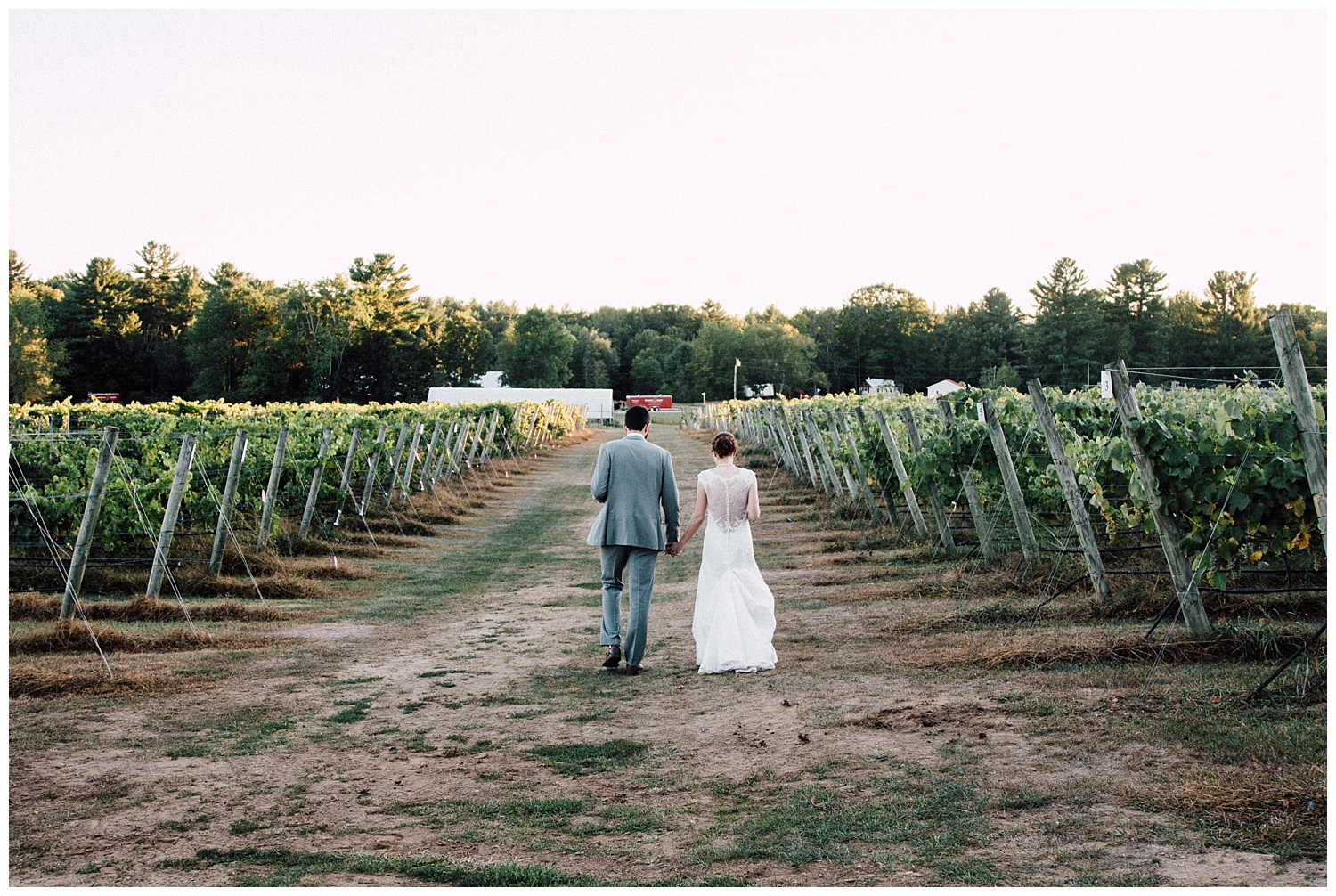 Sunset stroll on their relaxed wedding day through Flag Hills Vineyard in Lee, NH