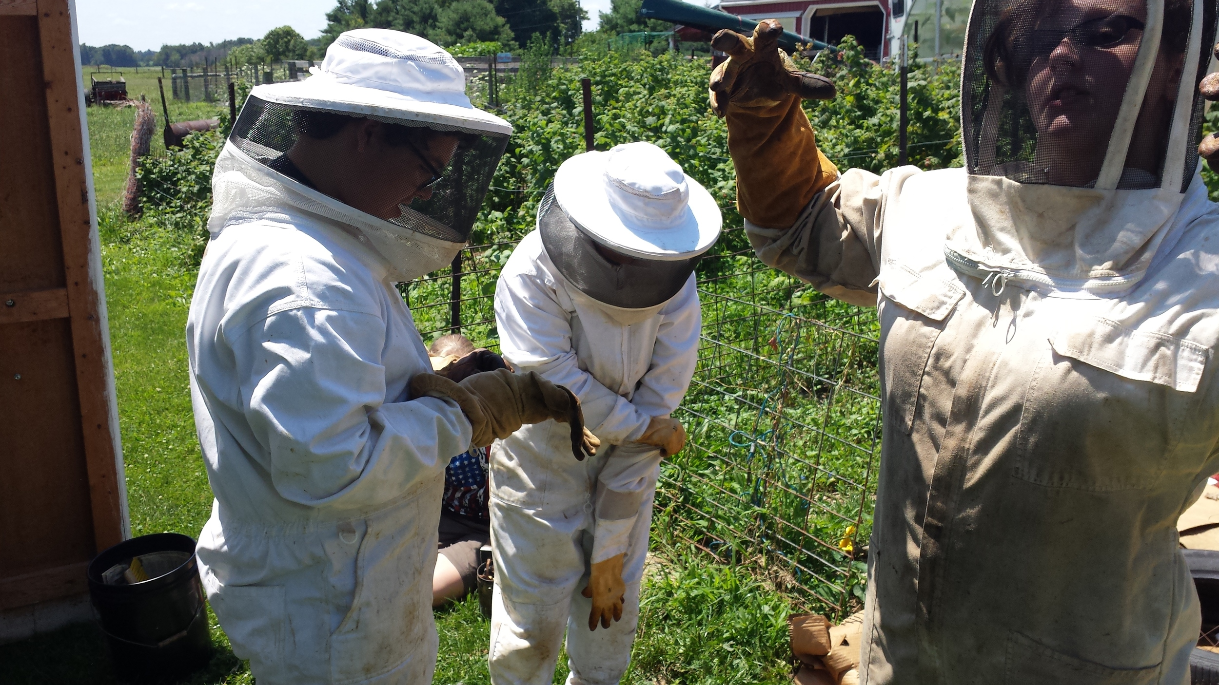 Climate Campers suit up to check out the bees.
