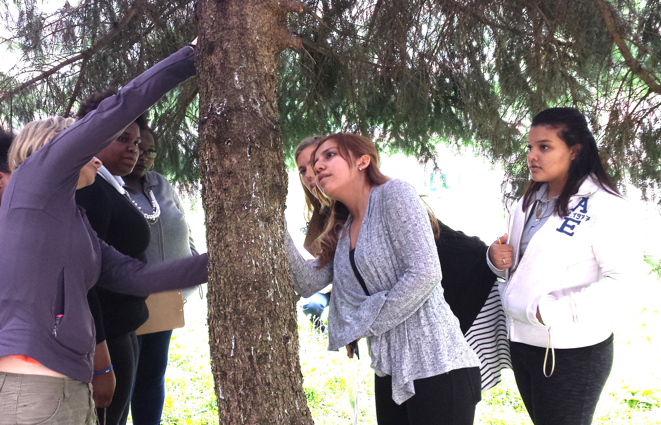 In May, 2016, Shortridge High School students dug in the on the Climate Recovery project, researching various aspects of the initiative. Here, Holly Jones (left) from the Indiana Urban Forest Council helps students understand how trees can be measured to assess carbon sequestration.