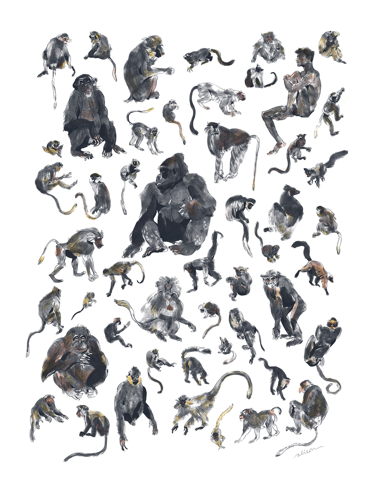Copy of Primates