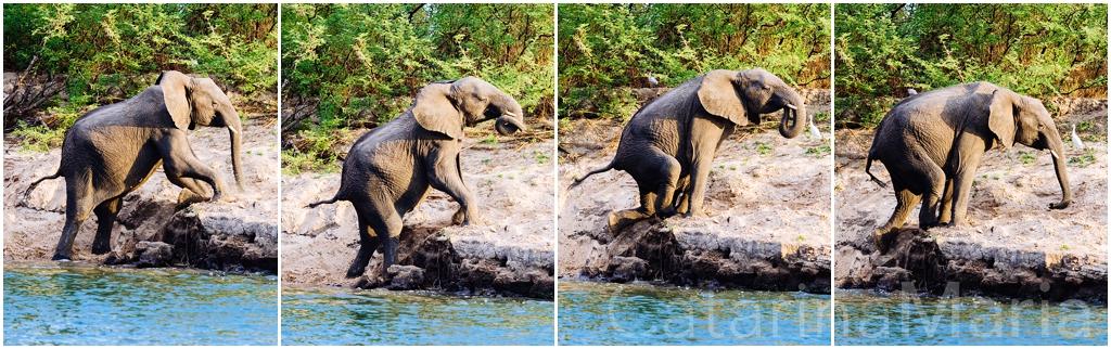 elefantes-zambezi.jpg