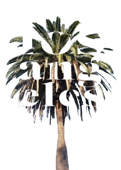 7OjS_Palm-Tree.jpg