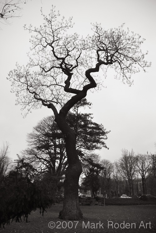 20080215-Tree, Paris.jpg