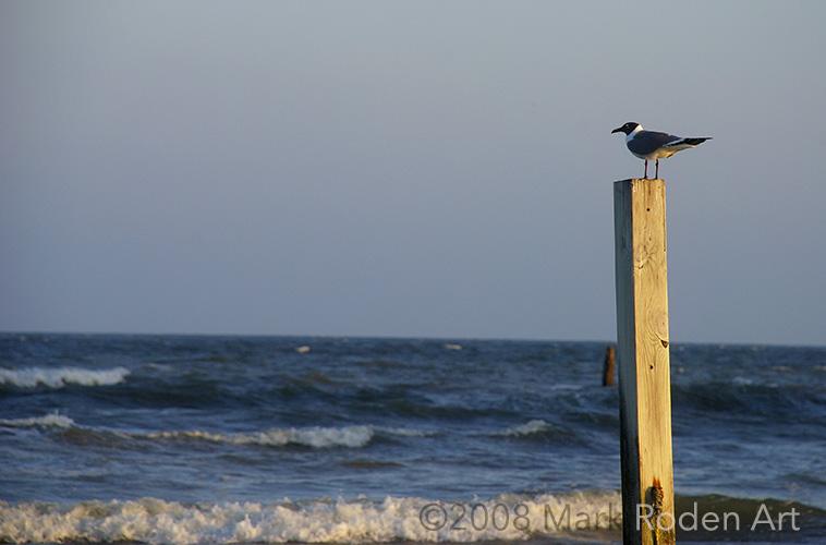 20080406-Galveston-121-2.jpg