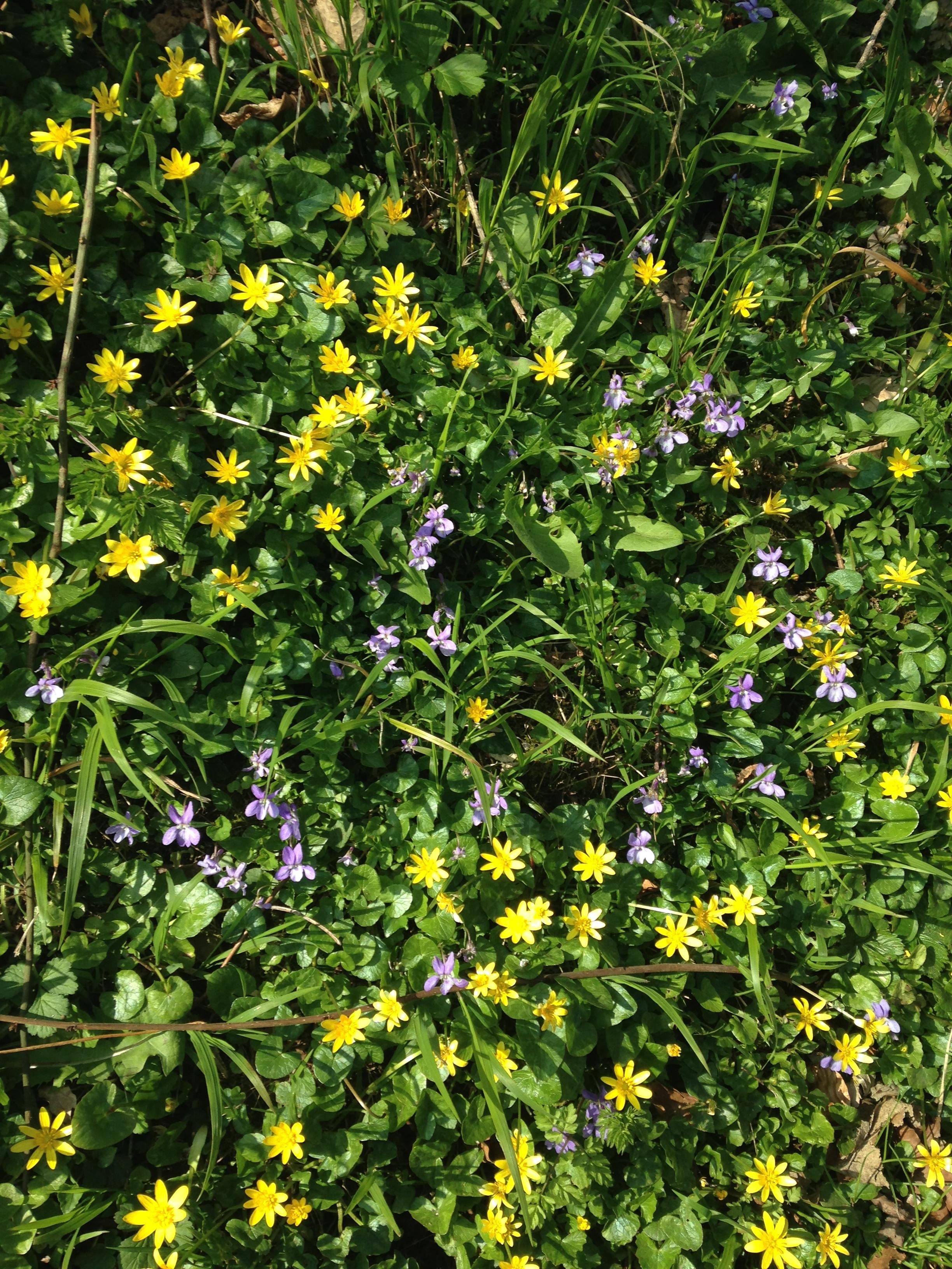 Springflowers1.jpg