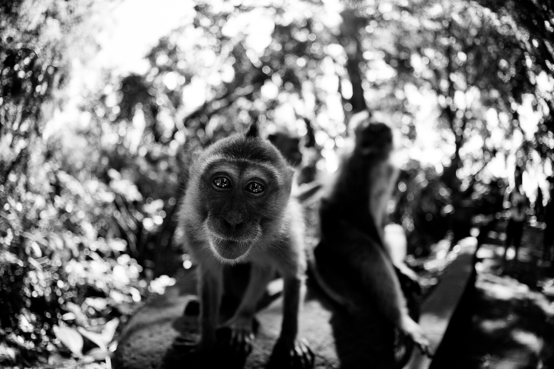 Francois Marclay_Bali_30.jpg