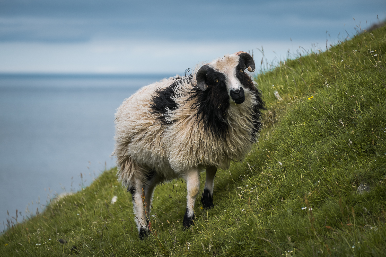 Francois Marclay_Faroe Islands_12.jpg