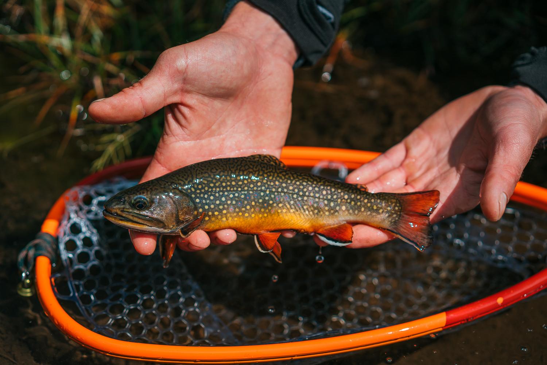 Francois_flyfishing_28.jpg