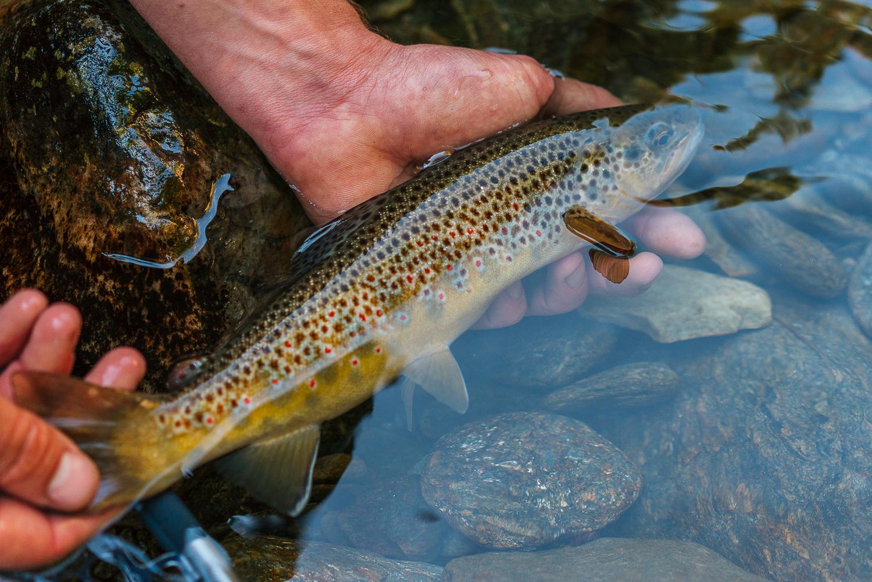 Francois_flyfishing_32.jpg