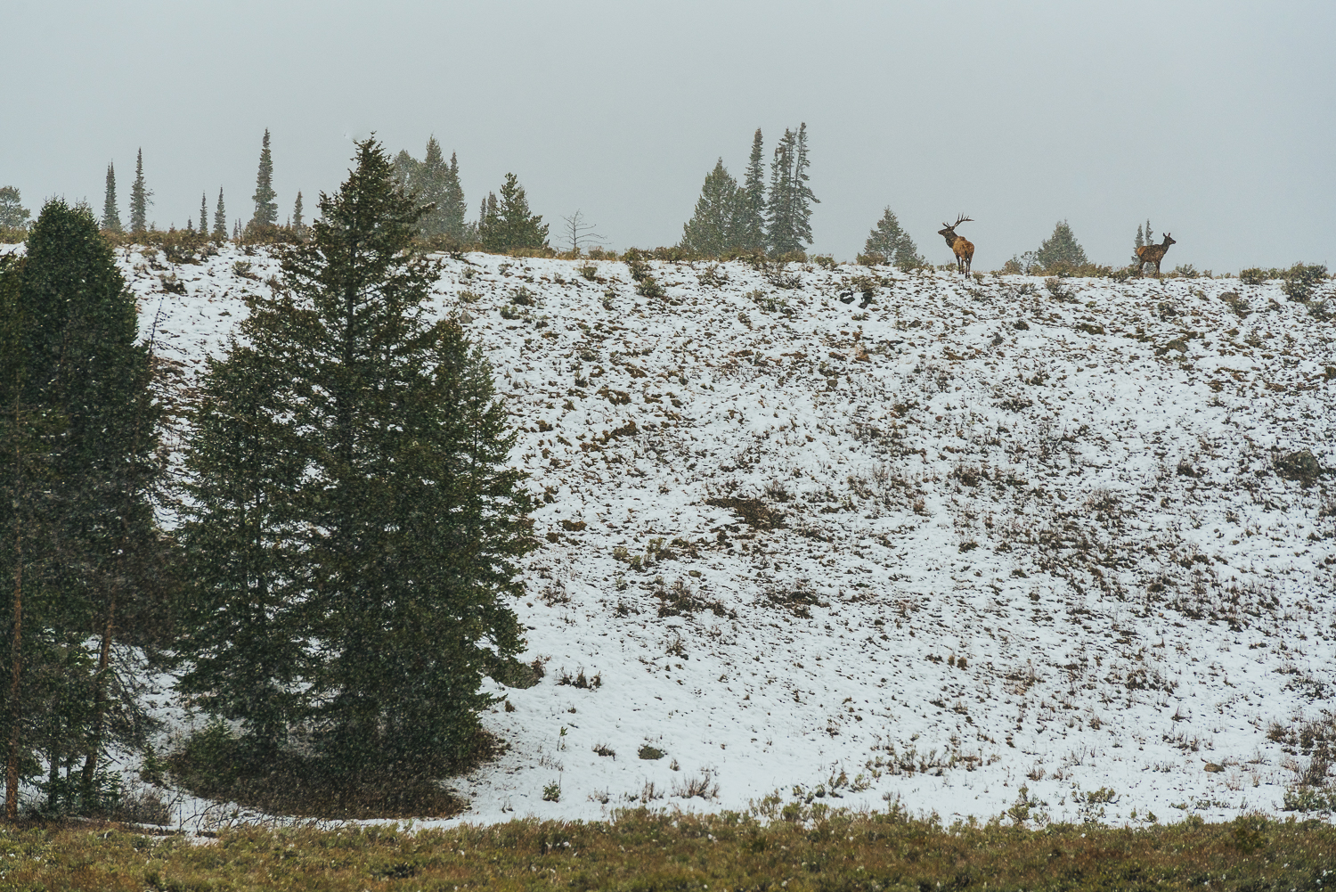 Francois Marclay_Yellowstone_8.jpg