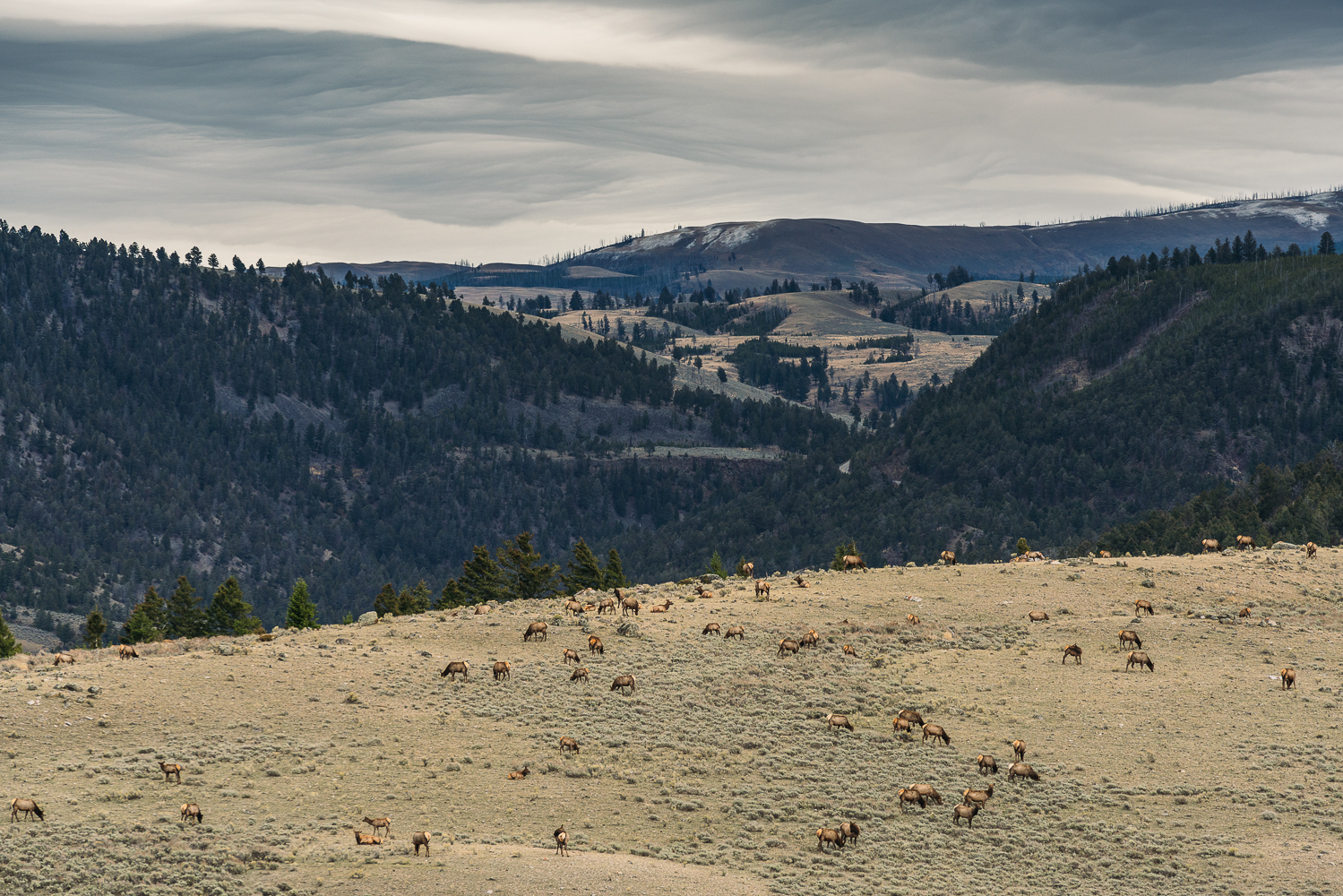 Francois Marclay_Yellowstone_23.jpg