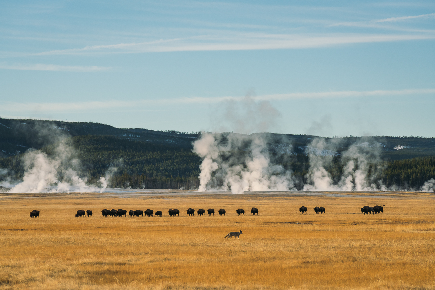 Francois Marclay_Yellowstone_27.jpg