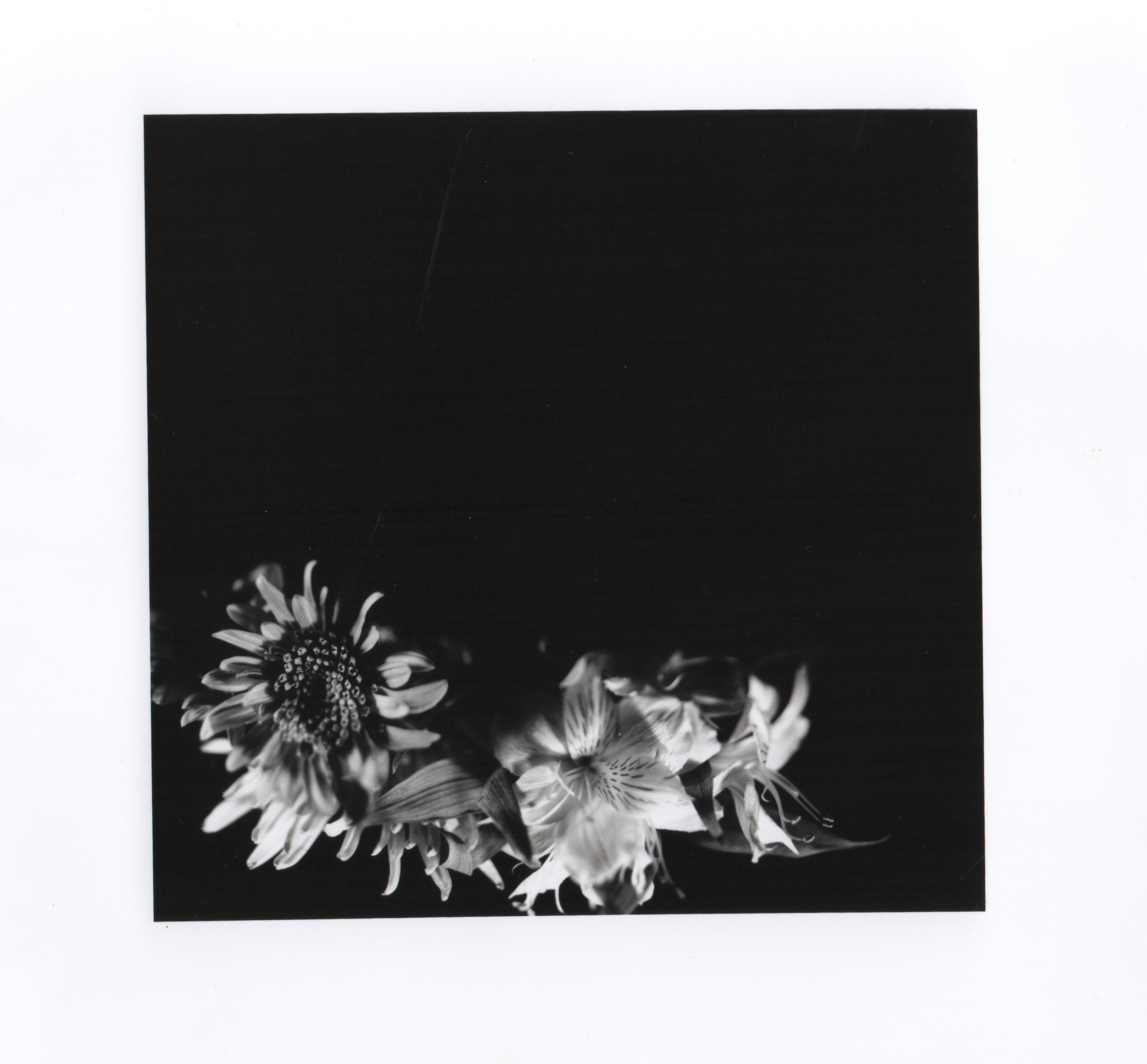 Flower 4x5 1 CLEANED.jpeg