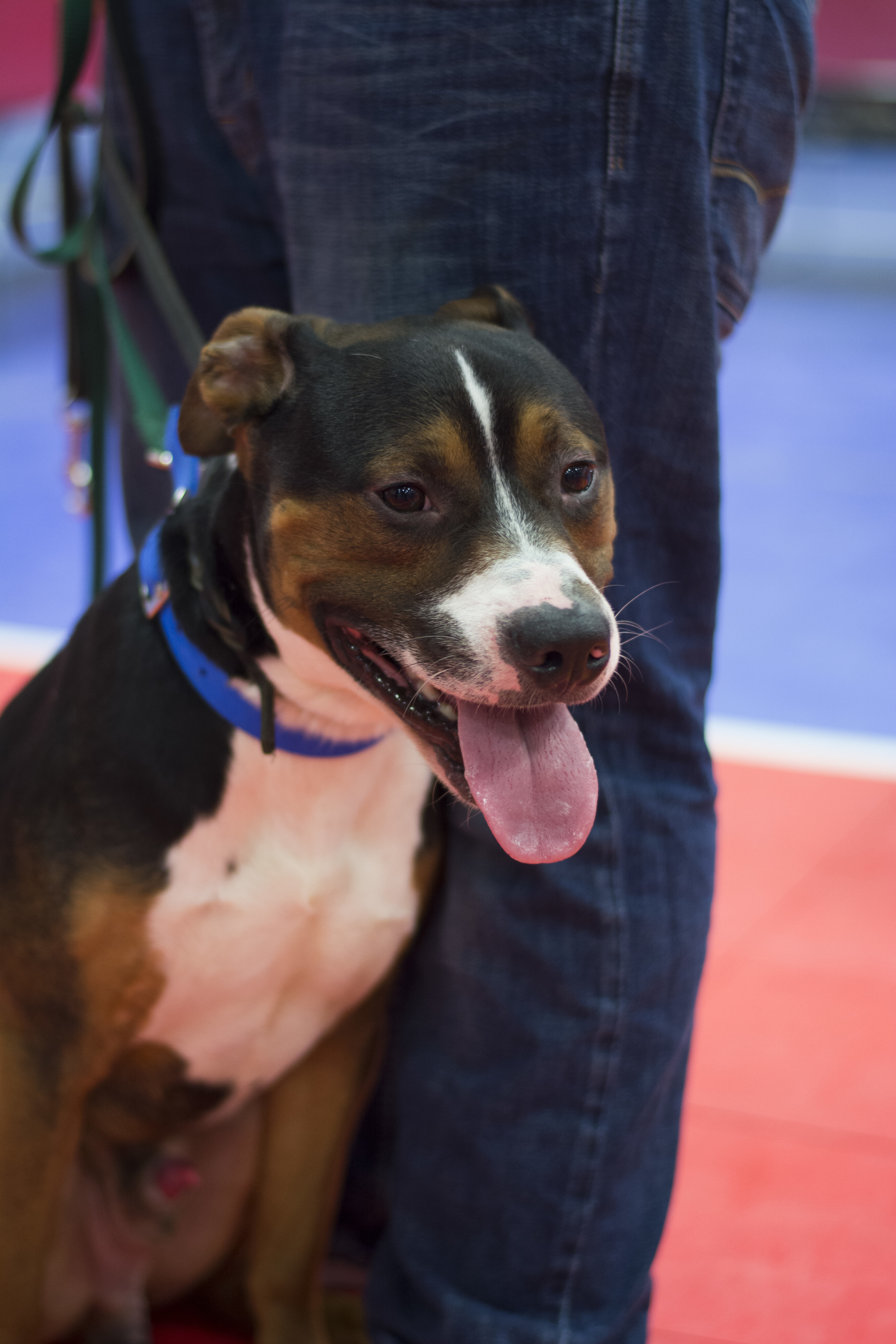Finley an adorable mutt looking for a forever home!