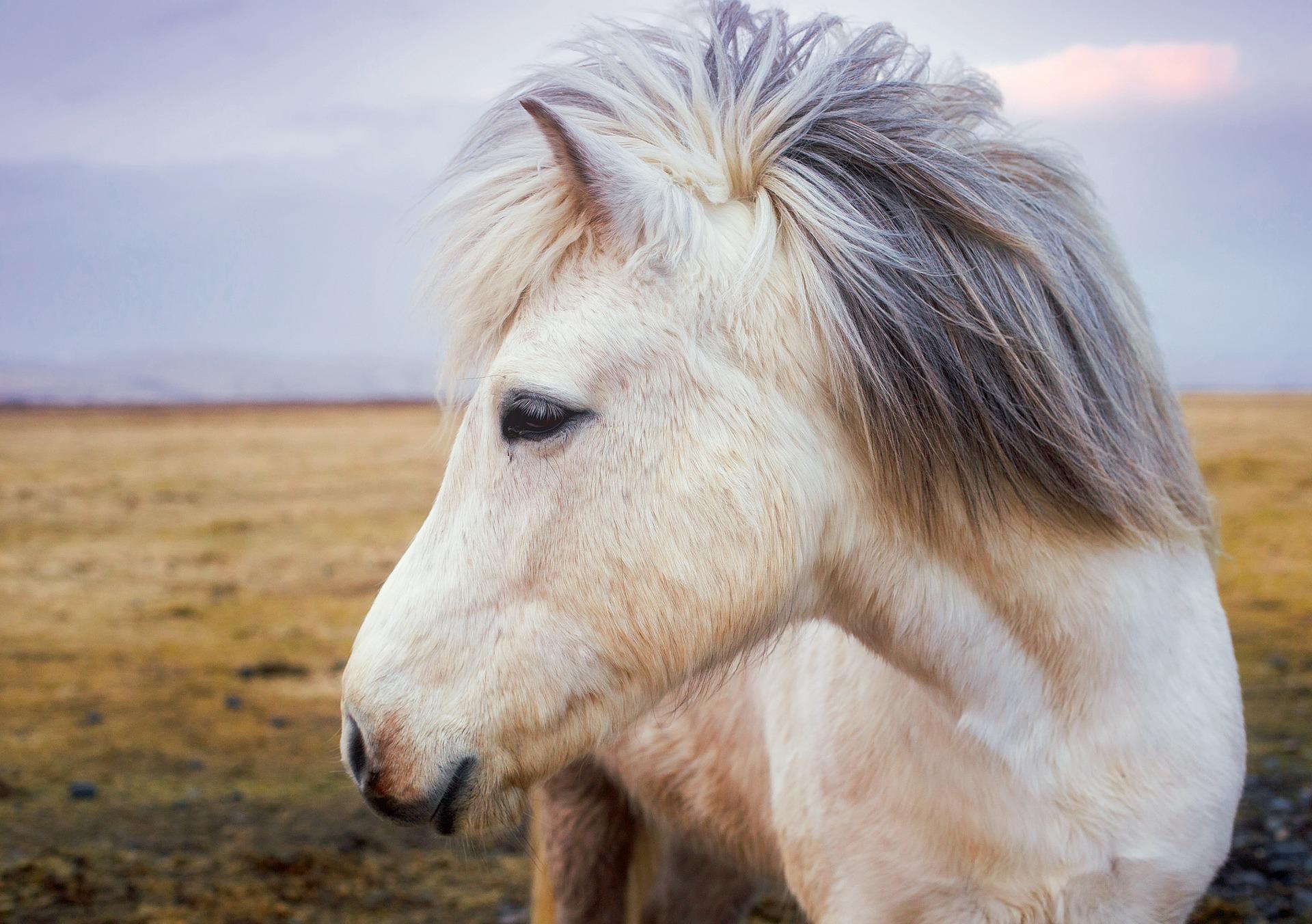 pony-2235916_1920.jpg
