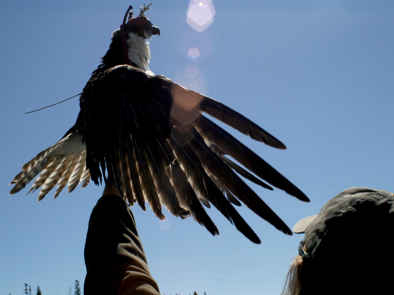 Osprey 8.jpg