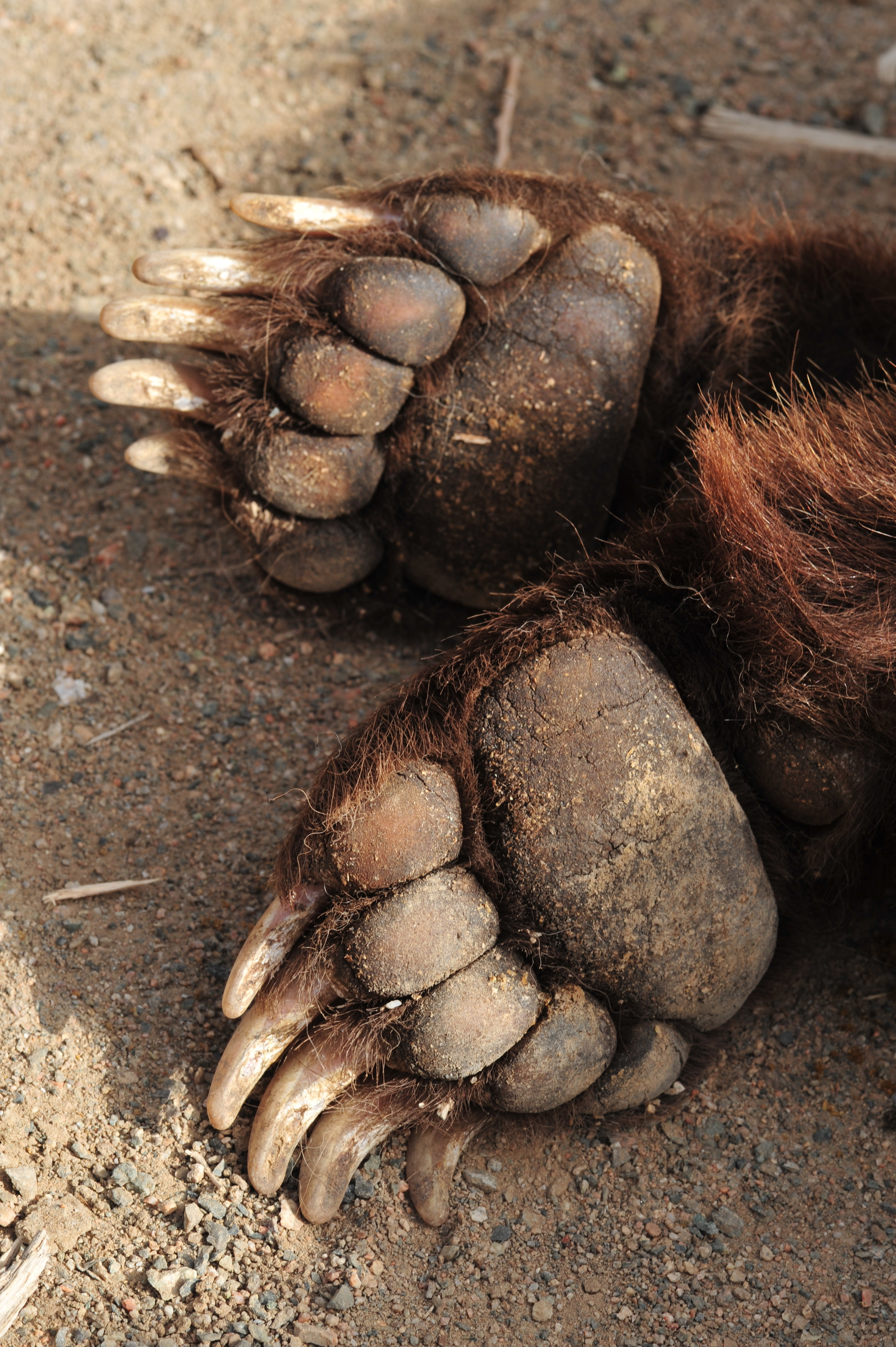 close up of front paws.JPG