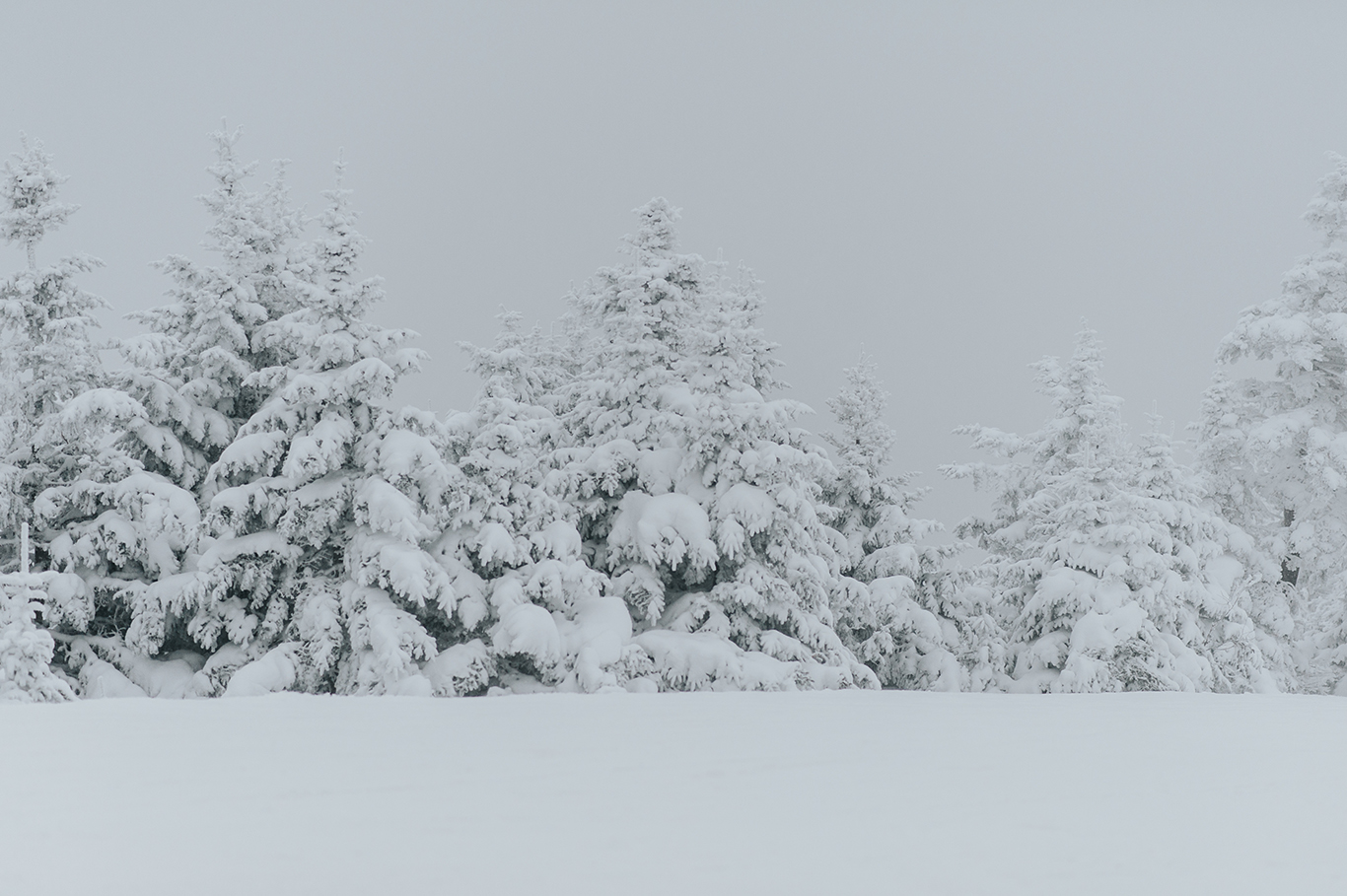 snow-covered-trees-engagement-killington-vermont-idena-photographer.jpg
