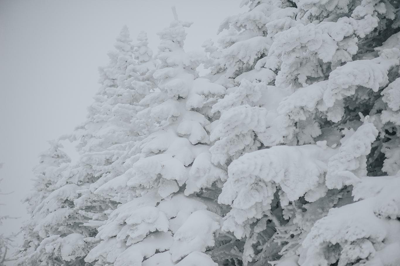snow-covered-trees-vermont-winter-killington-peak-idena-photographer.jpg