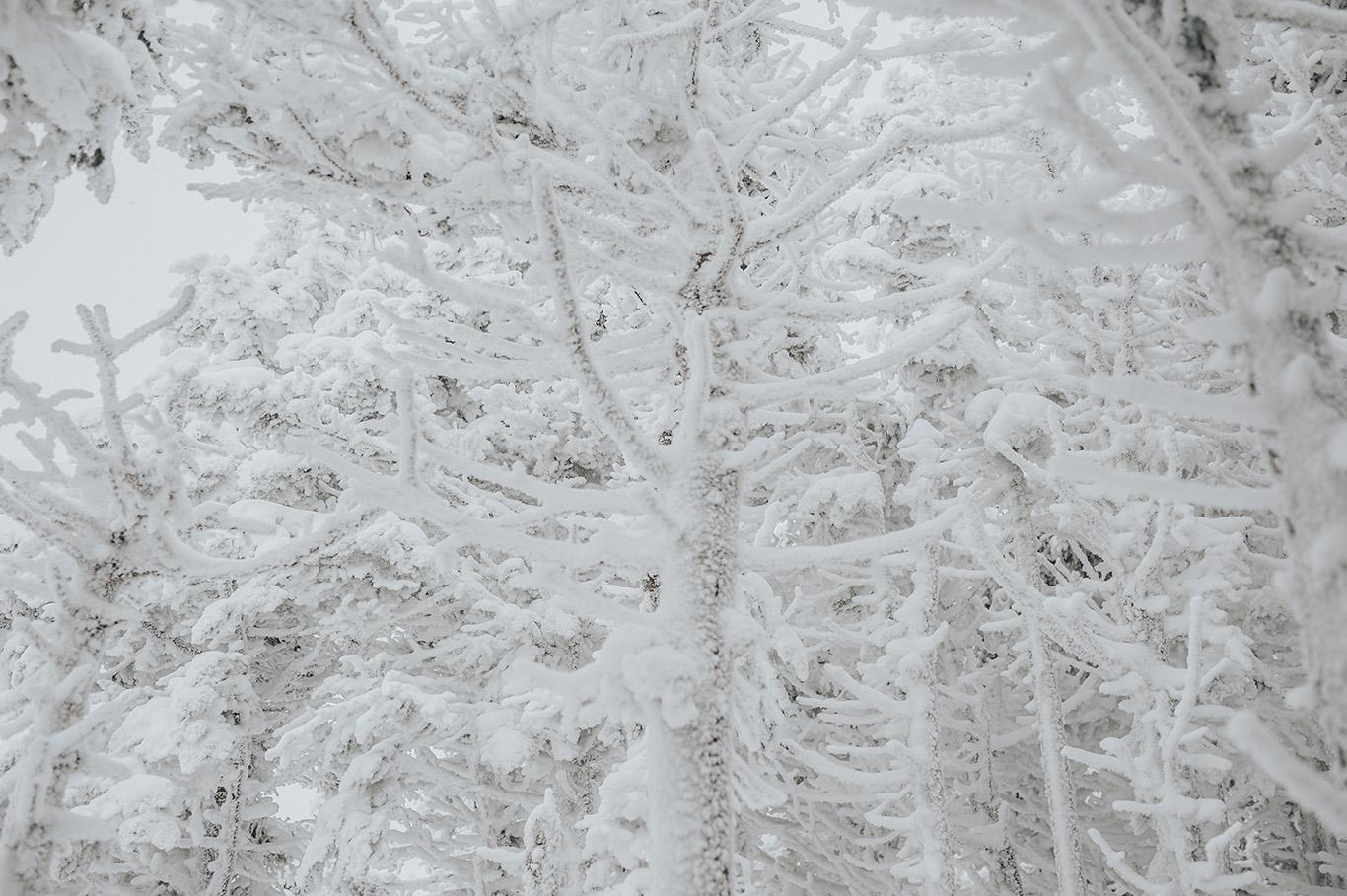 winter-snow-covered-trees-engagement-session-killington-vermont.jpg