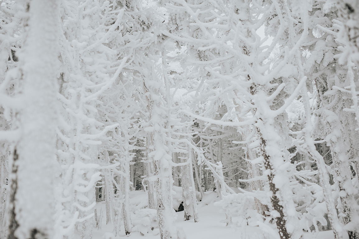 winter-trees-engagement-session-killington-vermont.jpg