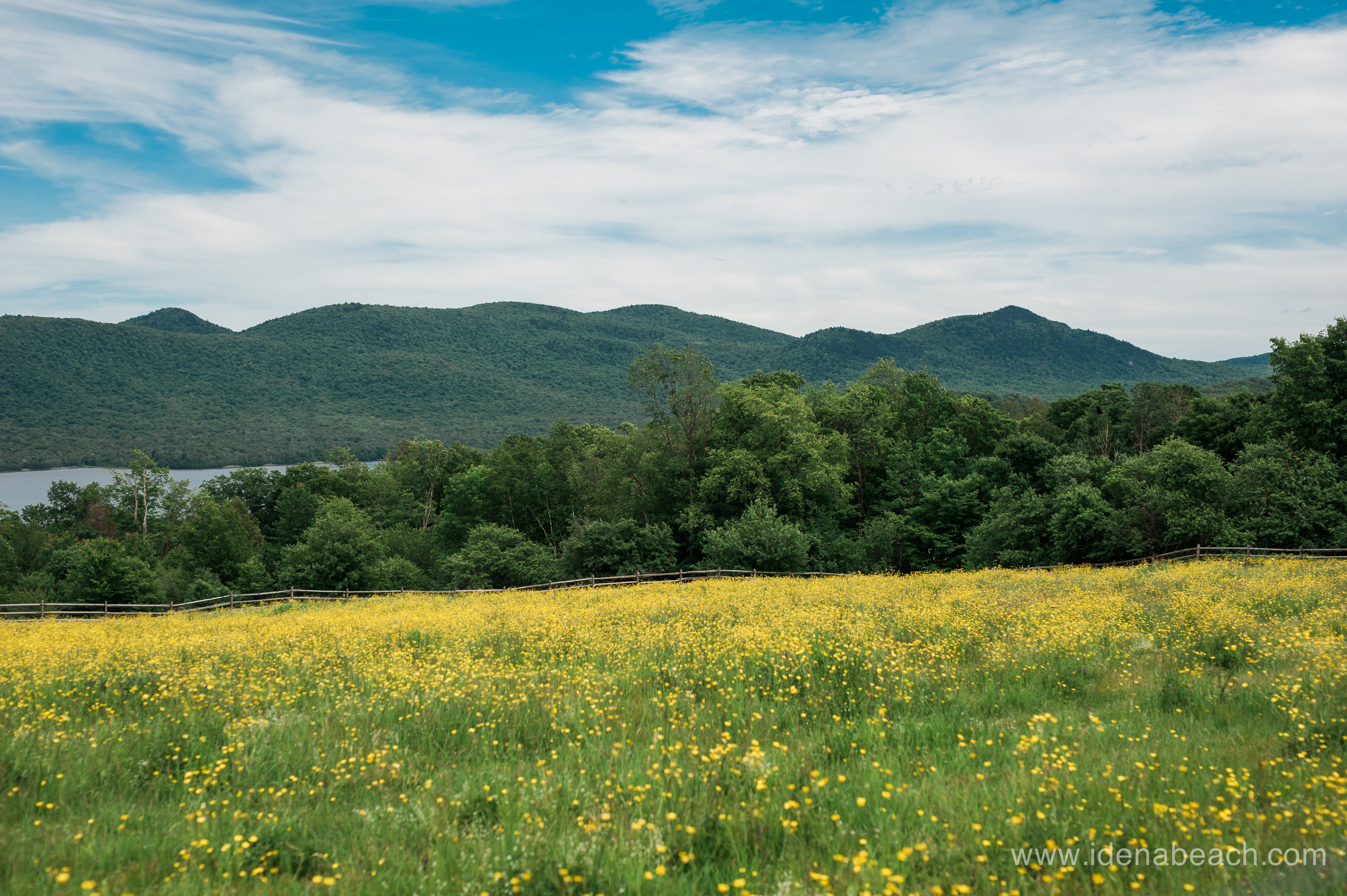 Fields of gold at The mountain Top Inn
